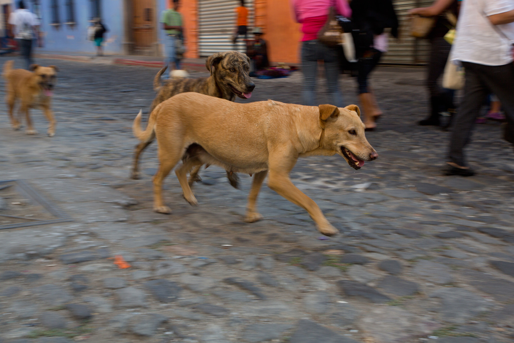 Antigua // Guatemala