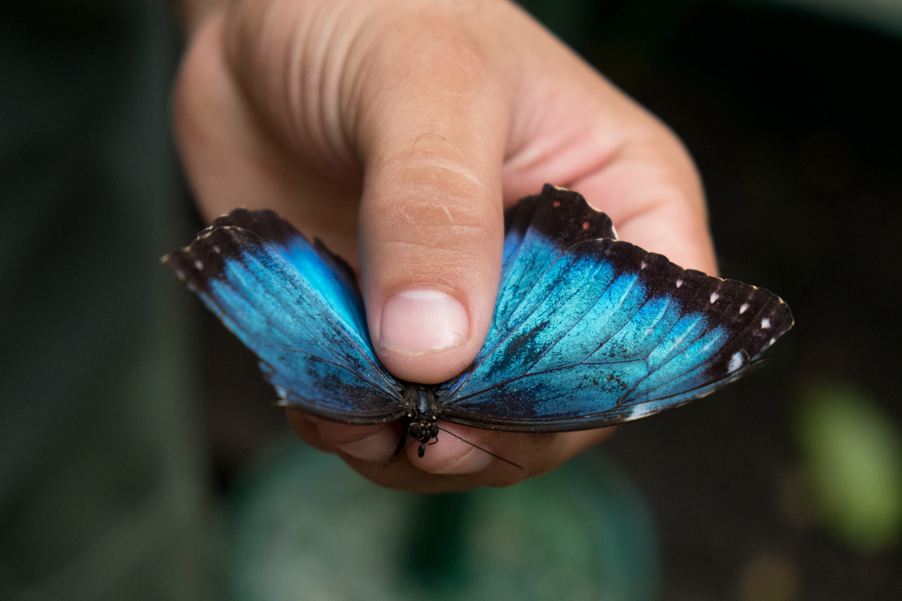 Butterfly Farm // Chaa Creek // Belize