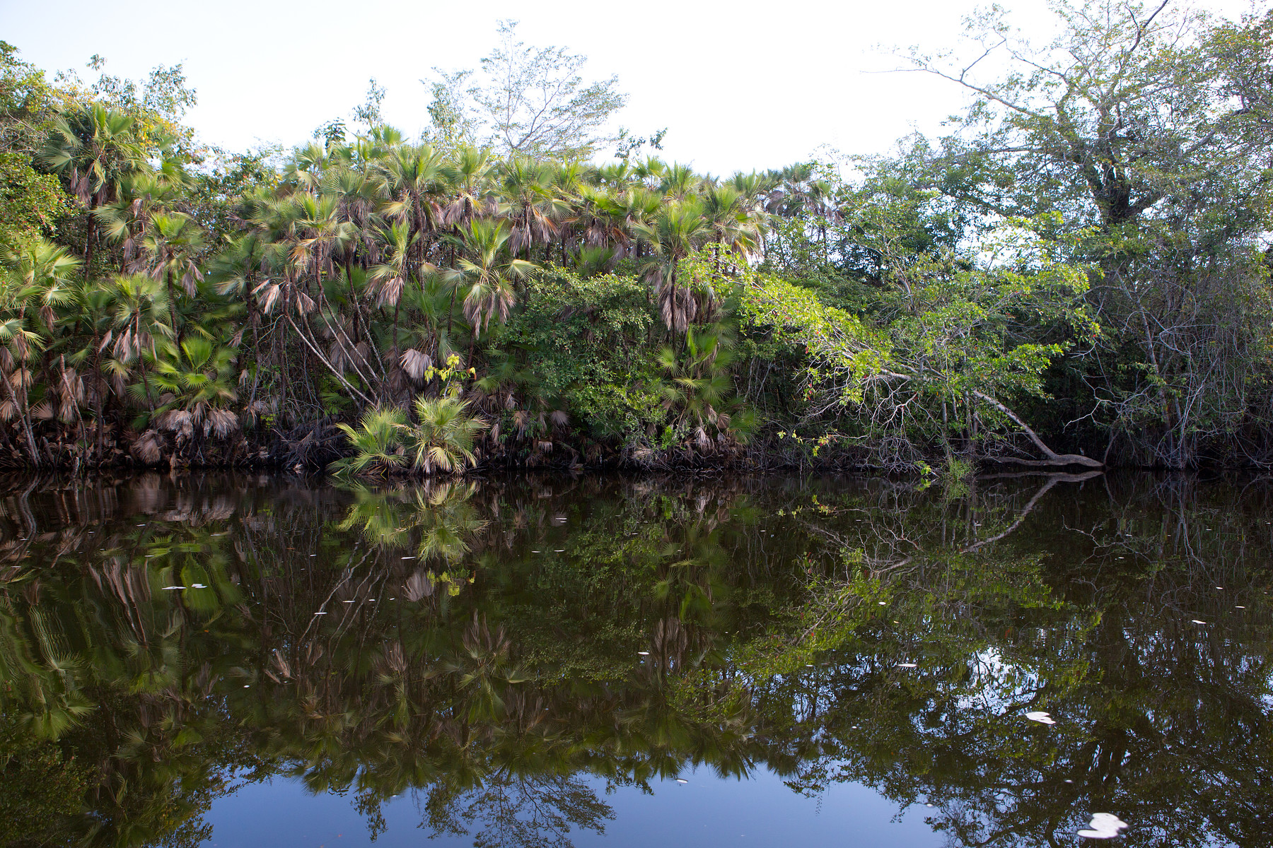 Lamanai Tour // Belize