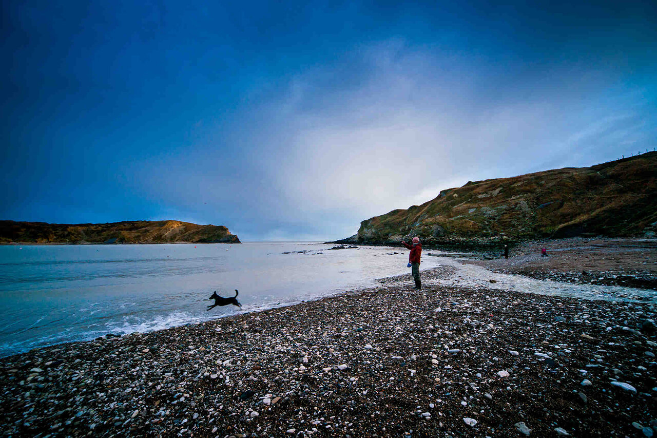 Dog Chasing Rocks