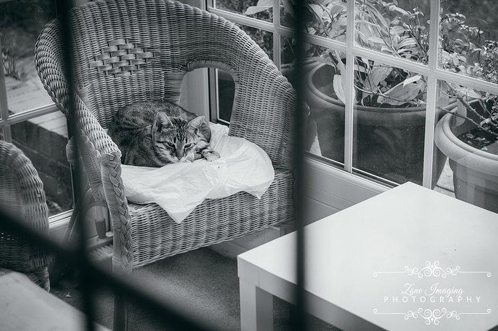 Ammarah cat