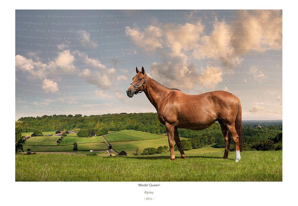 'Model Queen' (in foal)