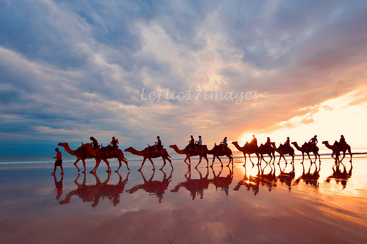 Camel Reflections