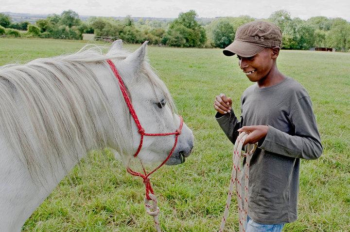 Horse Harmony