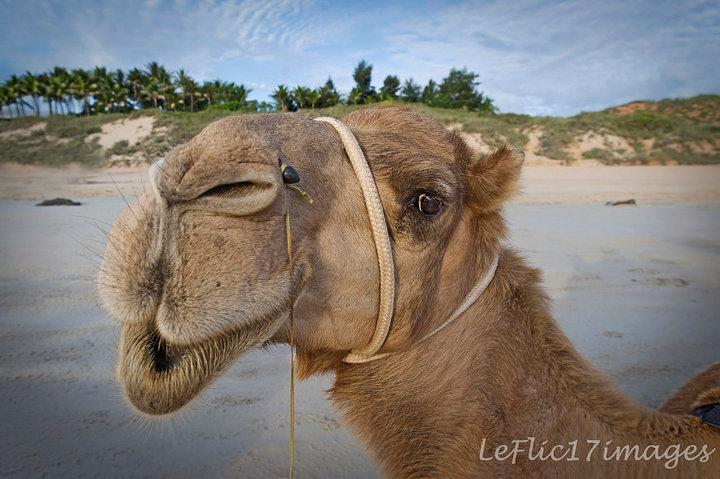 camel01_blog_image.jpg